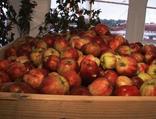 Den årlige traditionsrige Æblefestival på Gråsten Havn