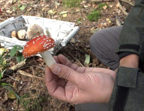 Gode råd til svampejagten
