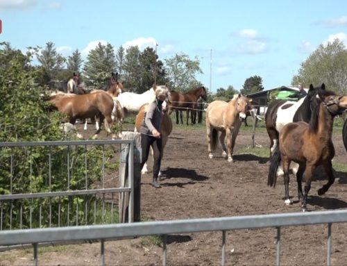 Årets Rideklub finder man i Tinglev